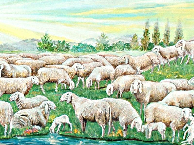 Ogni parola è una pecorella